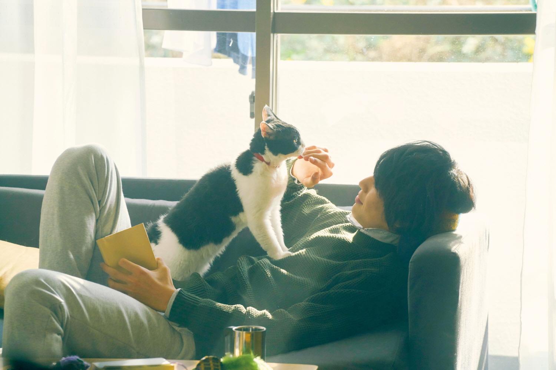 고양이 여행 리포트 스틸.jpg
